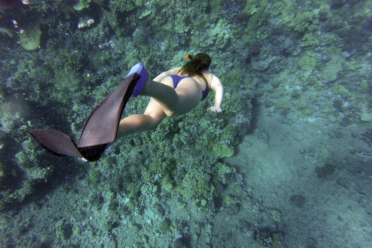 snorkeling-984422_12802
